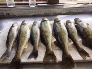 walleye May